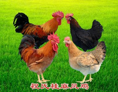 祝氏桂麻凤鸡2号
